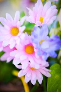 Kozzi-Silk-Flower-Closeup
